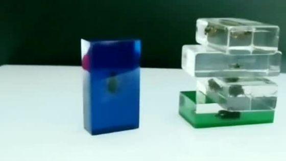 厂家定制 透明树脂工艺品 亚克力内埋真昆虫标本  可批量定制